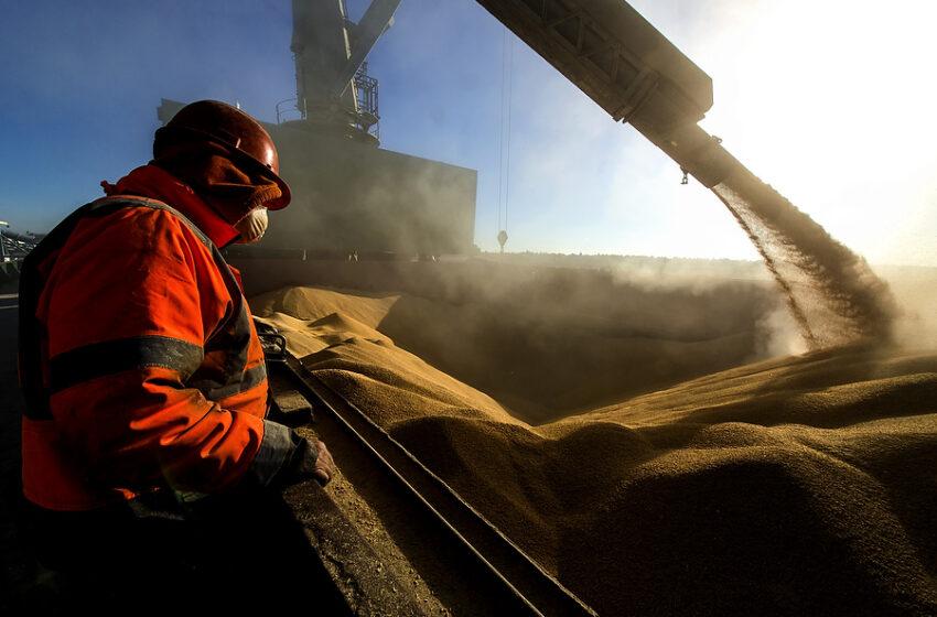 Preços mundiais do arroz baixaram mais 4% em agosto