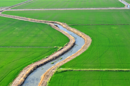 Rice Fields, Tuesday, July 15, 2014.  Photo Brian Baer