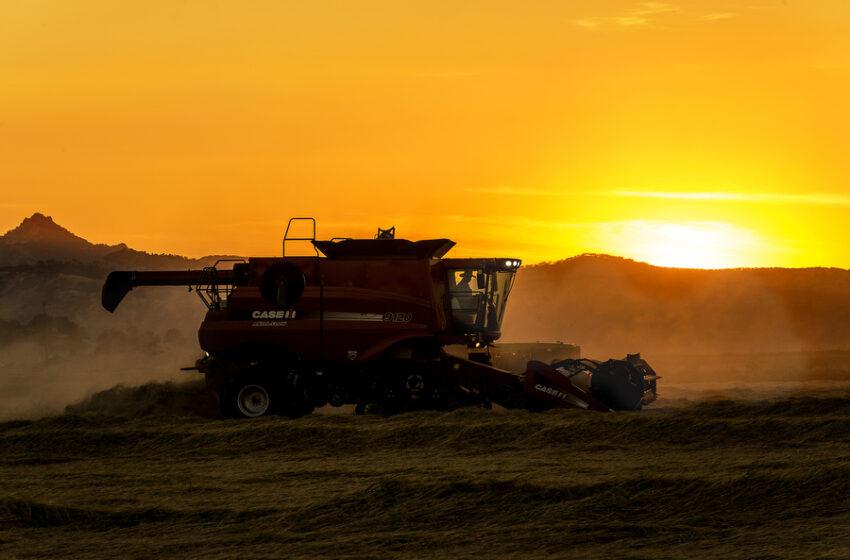 EUA: Relatório do USDA é altista, colheita no Delta ganha força