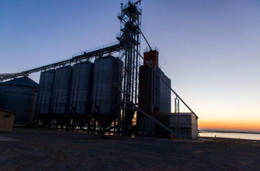 Vendas internas de arroz estão fracas, mas exportações seguem firmes