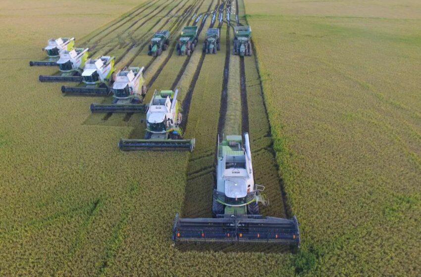 Argentina aumentou 30,9% as exportações de arroz