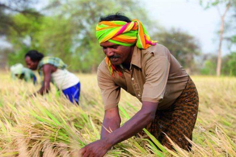 Por arroz, Índia invoca cláusula de paz na OMC