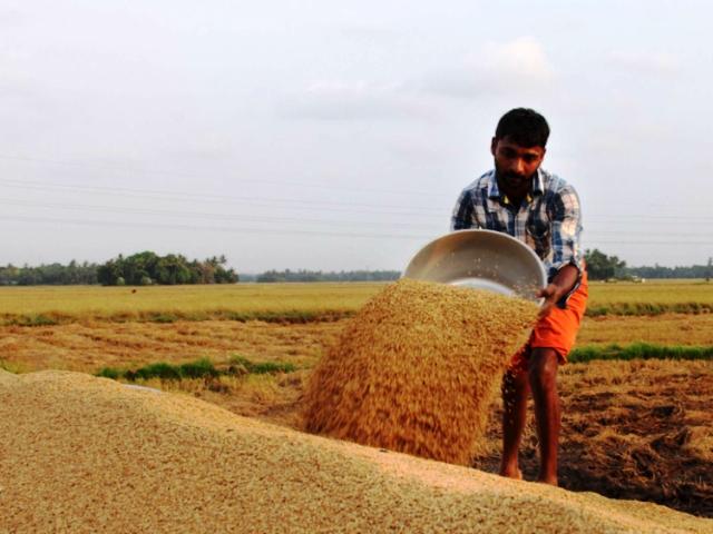 Preços da Índia caem e Vietnã atinge menor cotação em cinco meses