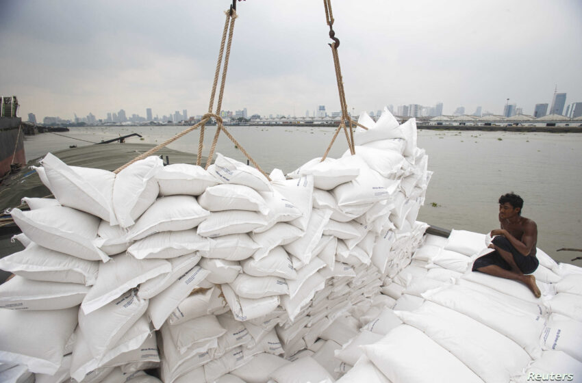 Cautela em meio à volatilidade do mercado de arroz tailandês