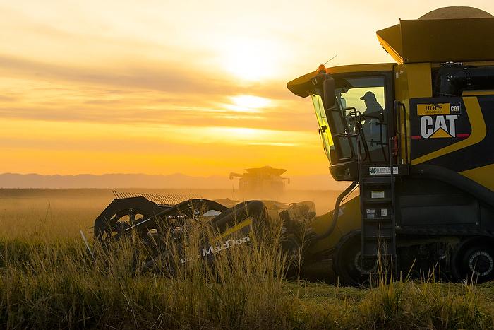 Mercado de arroz: USDA apresenta um pouco de alta
