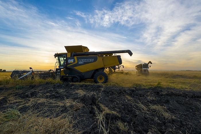 EUA: Mercado é firme enquanto a colheita do Delta continua em alta velocidade