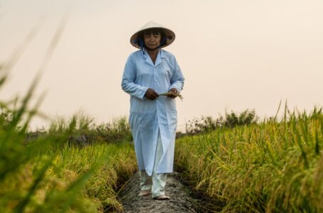 Delta do Mekong, Vietnã, março de 2014. Crédito: Georgina Smith, CIAT