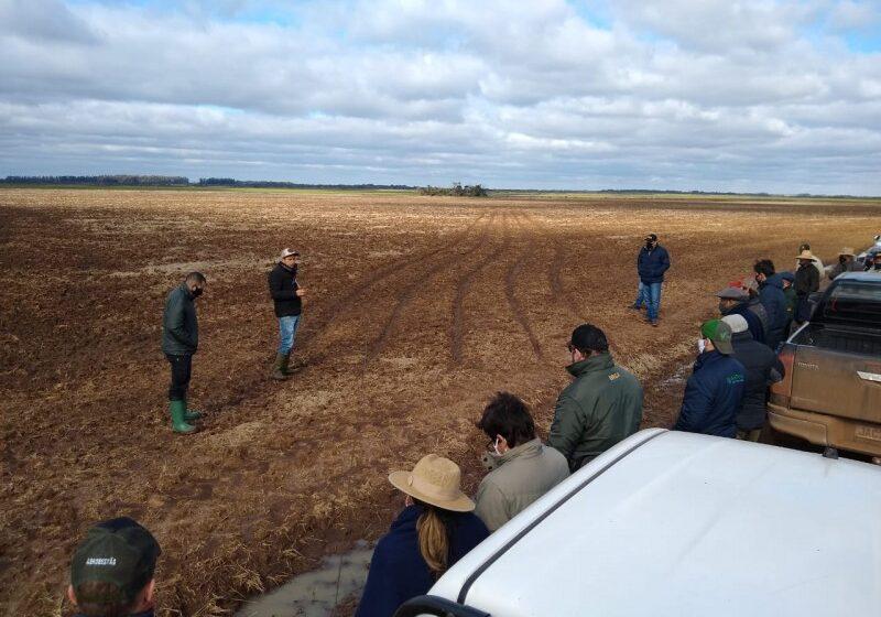 Trigo em áreas de arroz é tema de roteiro técnico em São Borja