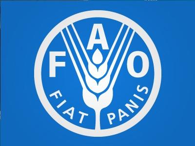 Divulgação do Indicador Mundial dos Preços do Arroz da FAO