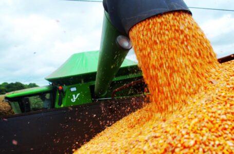 Bons preços impulsionam a cultura do milho