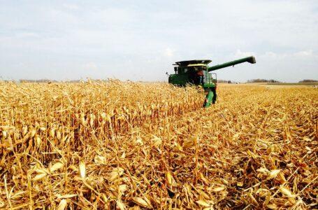 Colheita do milho está chegando ao final no RS