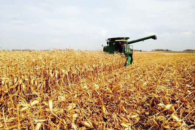 Chuvas atrasaram a colheita do milho no RS