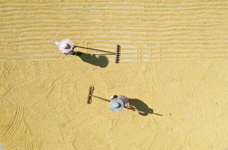 Foto aérea tirada em 18 de agosto de 2021, mostra aldeões exibindo arroz na vila de Taihe, cidade de Fuxing, cidade de Chishui, província de Guizhou. [Foto / Xinhua]