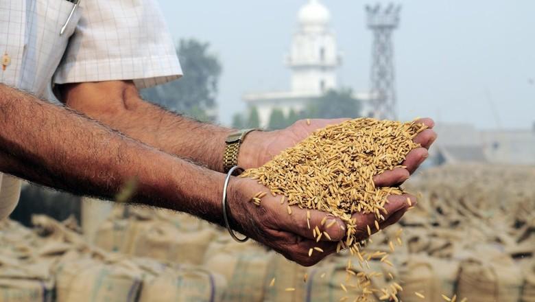 Preço na Índia caí ao menor nível em cinco meses com problemas logísticos