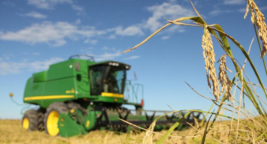 Rendimento recorde em arroz: 9.400 quilos por hectare no Uruguai