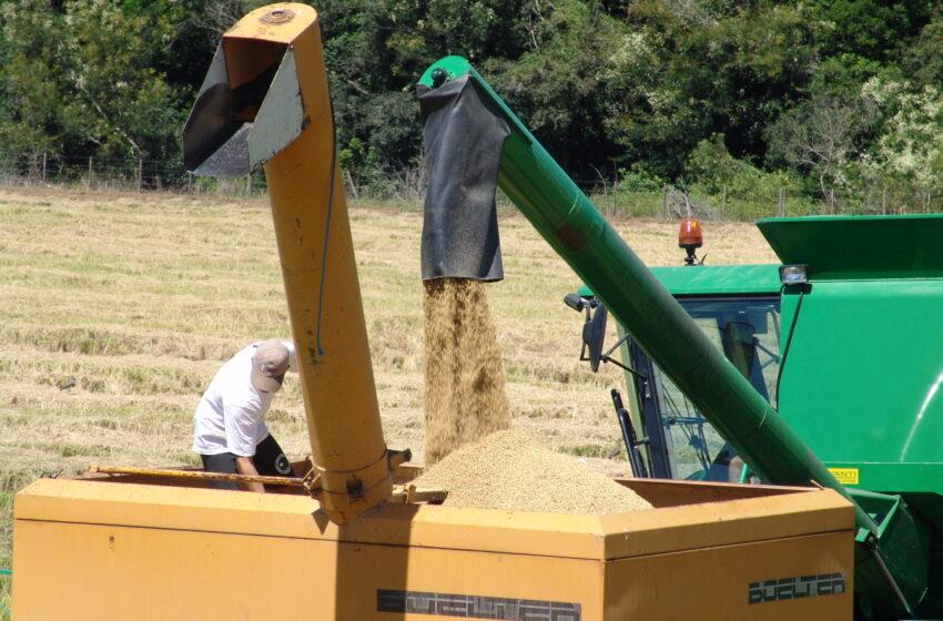 RS poderá aumentar em 1,2% a lavoura de arroz sobre a área colhida em 2020/21