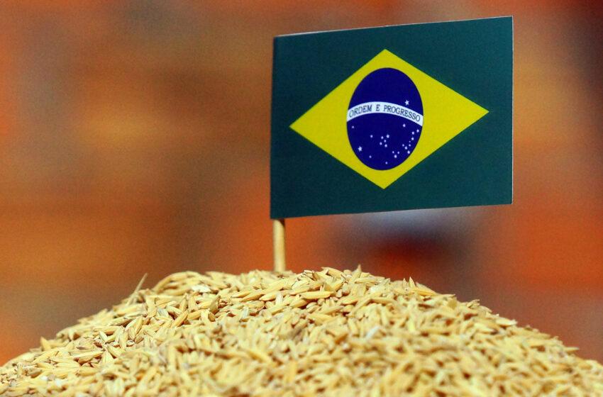 Por que os preços do arroz estão derretendo?