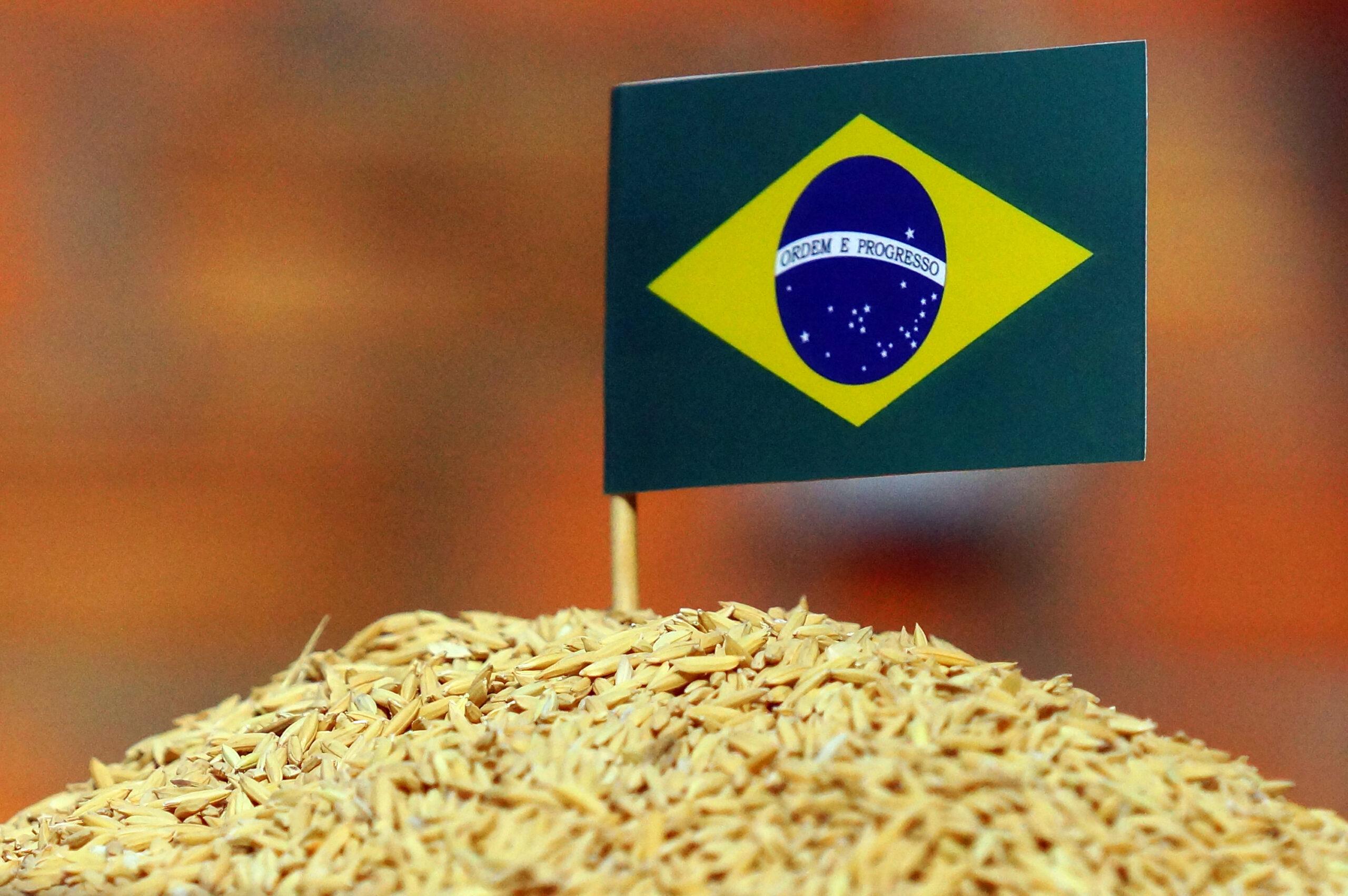 Arroz brasileiro: em busca de um piso referencial. FOTO: MARCUS TATSCH/PLANETA ARROZ