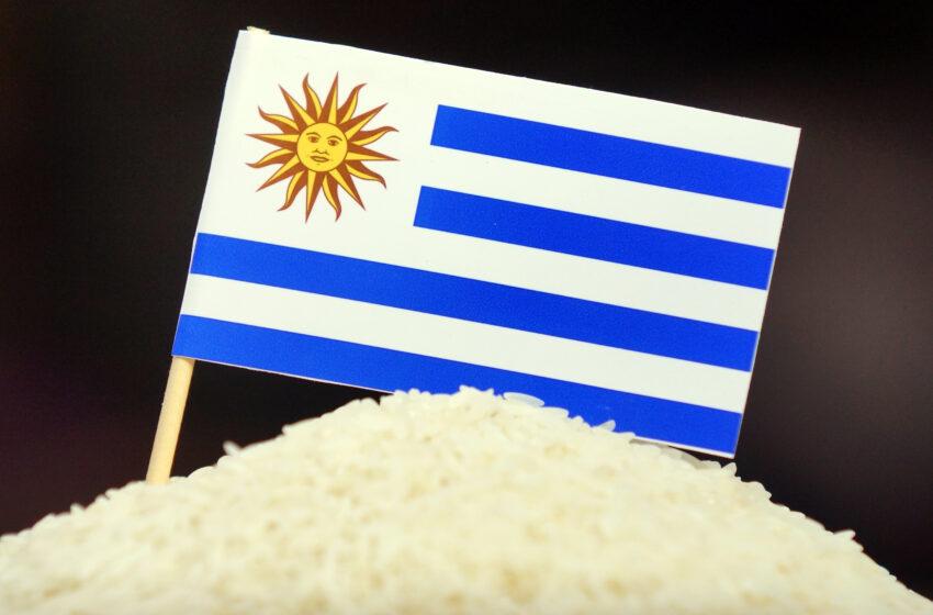 Boa notícia: Uruguai confirma nova venda de arroz branco ao Iraque