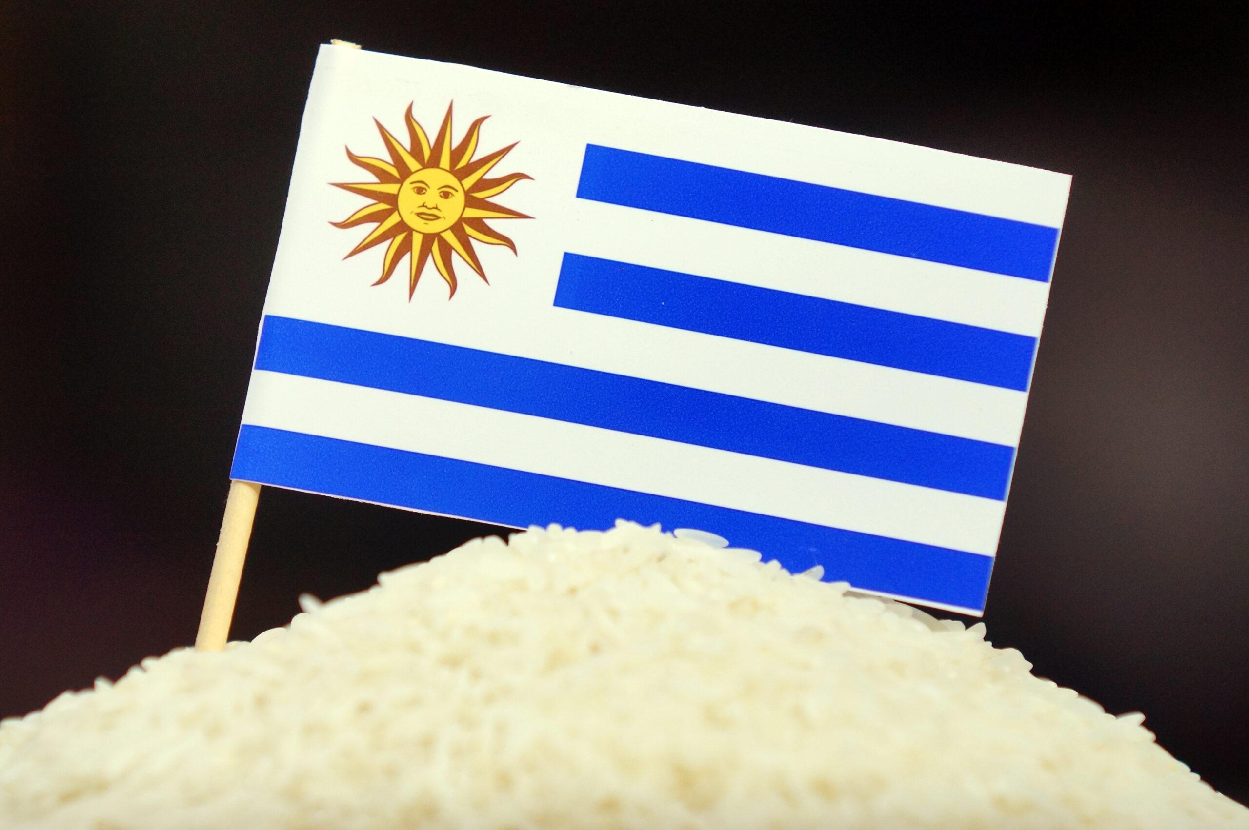 Arroz uruguaio: referência de qualidade internacional. FOTO: Marcus Tatsch/Planeta Arroz