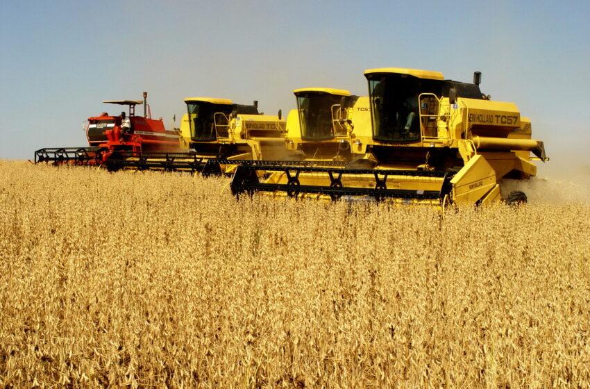 Colheita da soja alcança 80% no RS