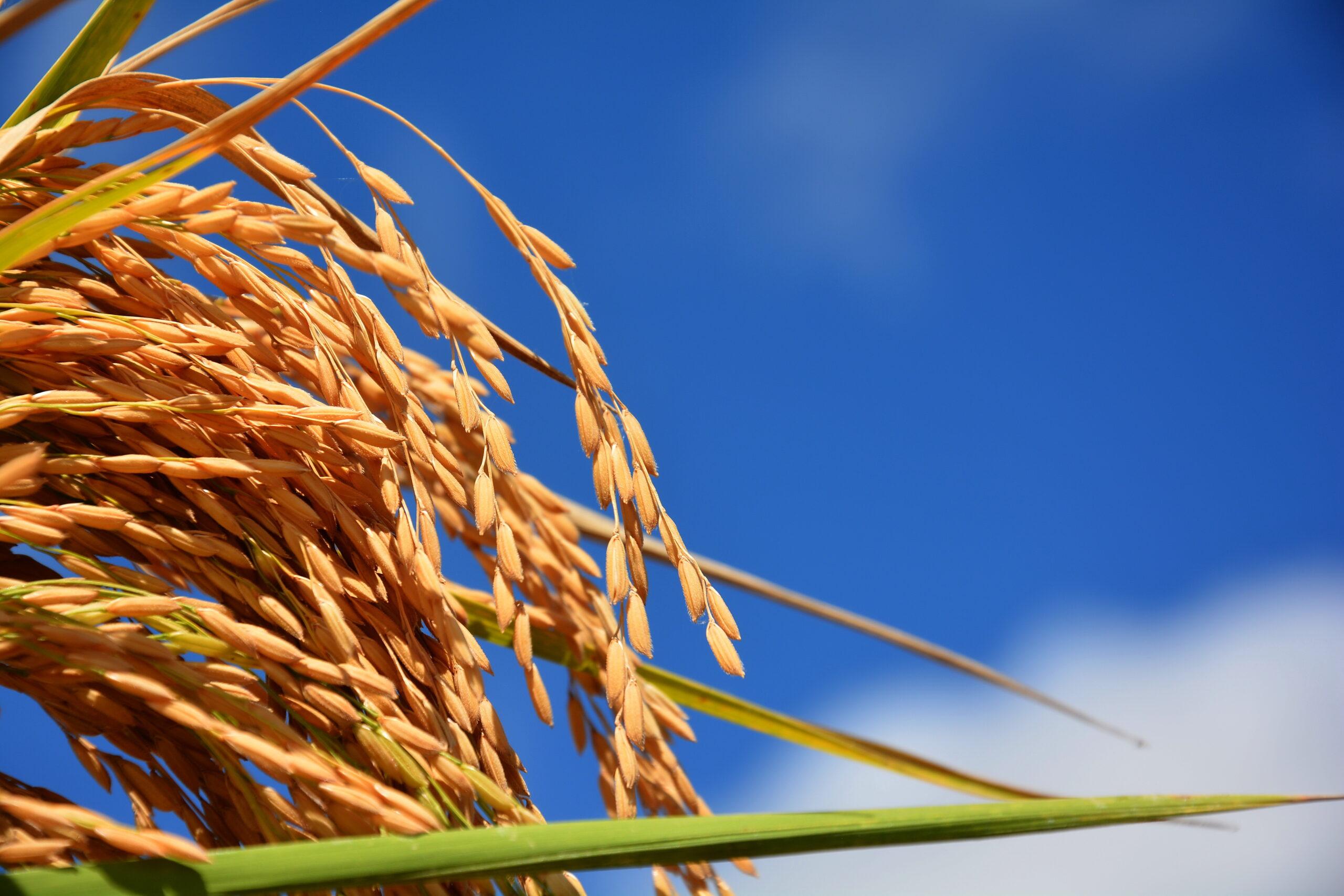Grandes produtores estão destinando de 10% a 15% da colheita para exportação