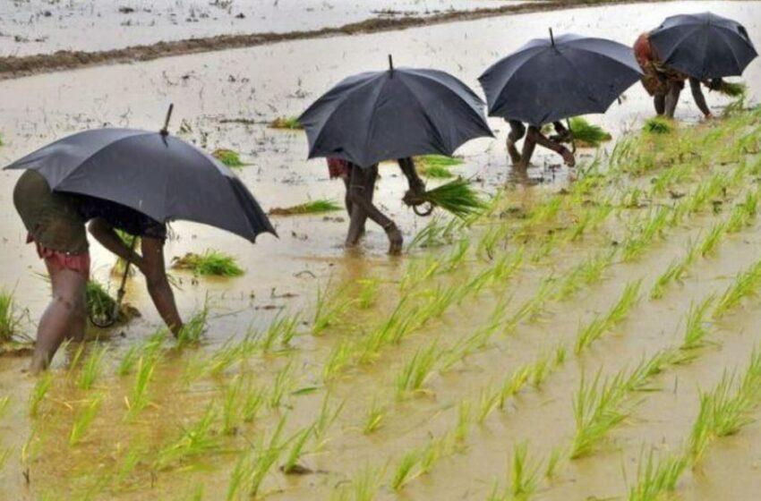 Chuvas ameaçam safras de kharif na Índia