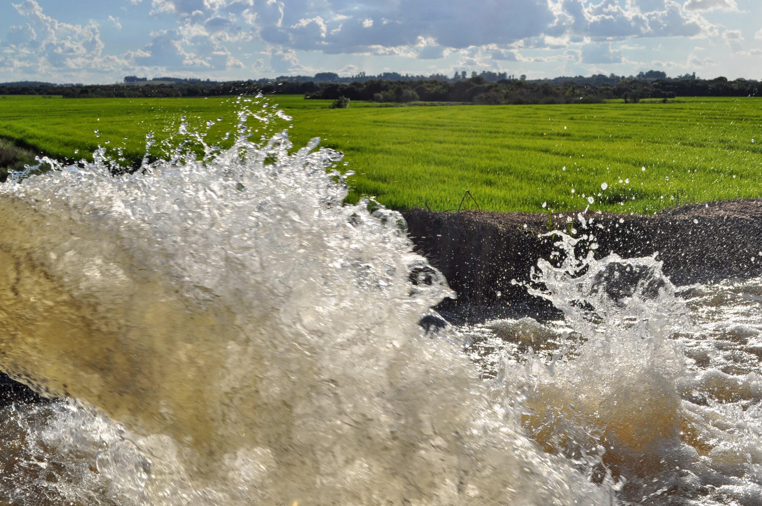 Monitoramento da irrigação tem nova tecnologia (Foto: Robispierre Giuliani/Planeta Arroz)