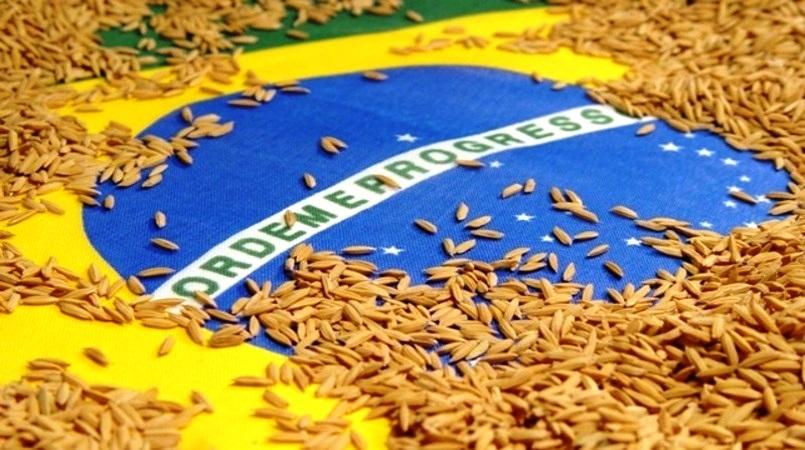 México confirma, sete meses após anúncio, isenção para arroz do Brasil