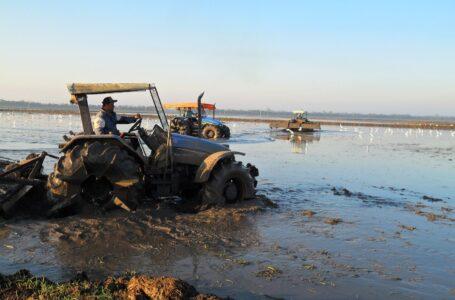 Preparo do solo para cultivo pré-germinado avança no RS ( Foto: Divulgação)