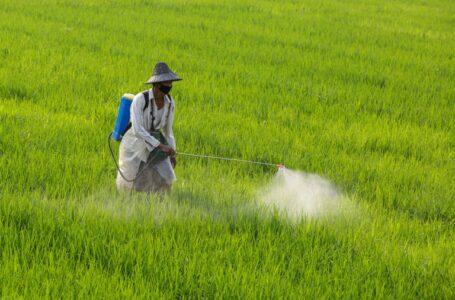 Produtor colombiano aplica defensivos em lavoura de arroz (Infobae)
