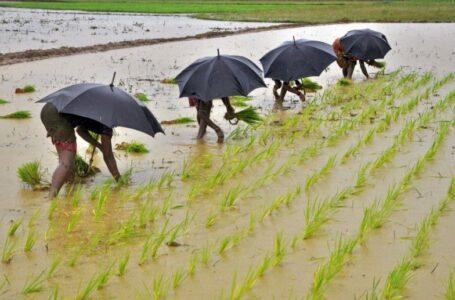 Trabalhadores plantam mudas em um arrozal nos arredores da cidade de Bhubaneswar, no leste da Índia, em 19 de julho de 2014. REUTERS / Stringer