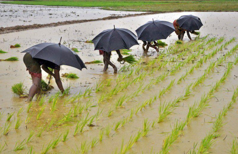 Chuvas de monção cobrem dois terços da Índia antes do normal e aceleram plantio do arroz