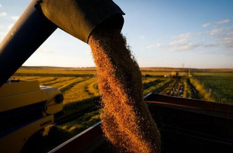 Mesmo com elevação de custos, produtores uruguaios ampliarão área