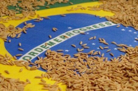 Exportações de arroz em casca para a América Central ajudaram na balança comercial positiva (Robispierre Giuliani – Planeta Arroz)