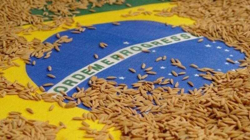 Abiarroz: Gâmbia e Costa Rica lideram importação de arroz do Brasil em abril