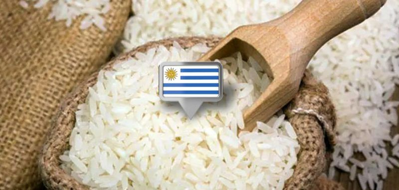 Uruguai exporta 64.234 toneladas de arroz em agosto