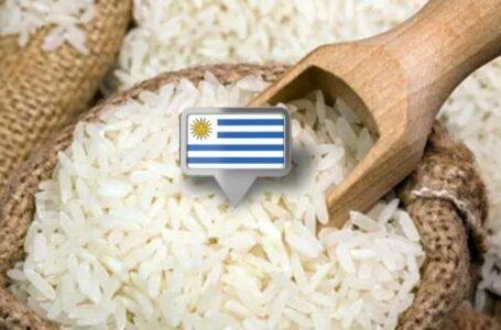 Arroz uruguaio: vendas 34,5% menores e preços 30,7% maiores em 2021