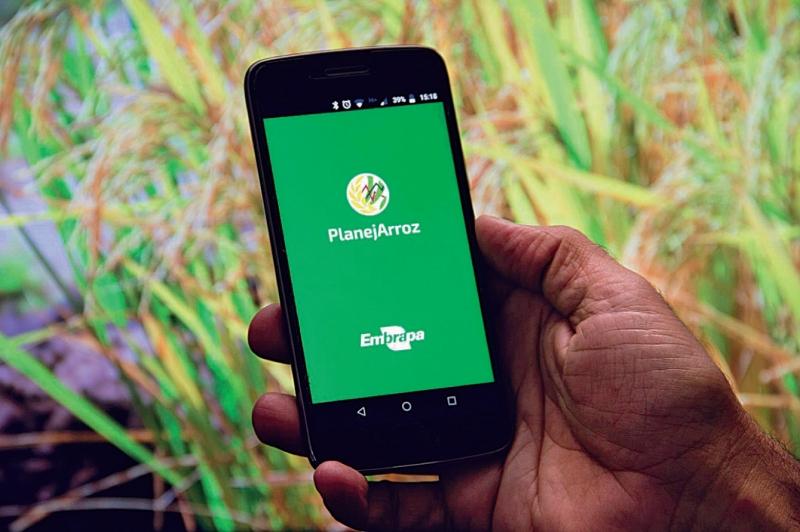 Uso do PlanejArroz para avaliar a influência do clima na produtividade do arroz irrigado no Rio Grande do Sul, na safra 2019/2020