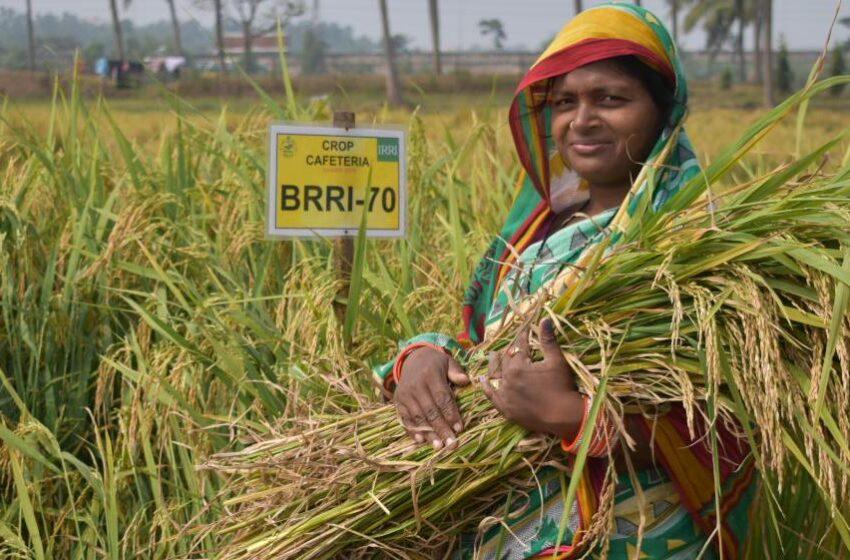 Índia: safra de verão registra 150,50 milhões de toneladas em 2021/22