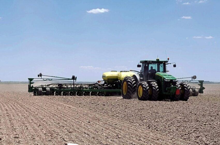 Em ritmo constante, semeadura de arroz 2021/22 avança no Uruguai