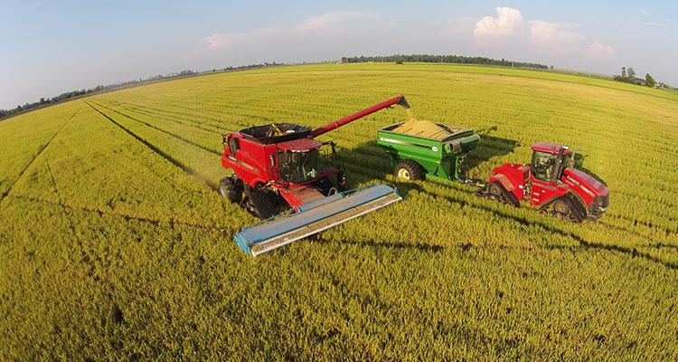 USDA relata fatores de alta notáveis para o arroz dos EUA