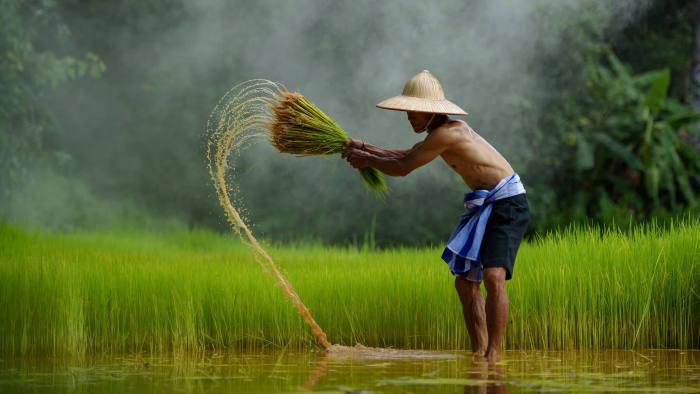 Previsão de exportação de arroz da Tailândia mais baixa