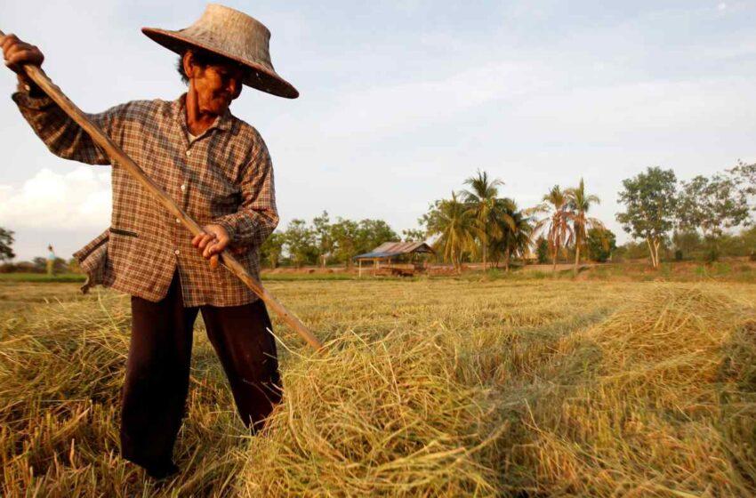 Tailândia quer recuperar posição de maior exportador mundial de arroz