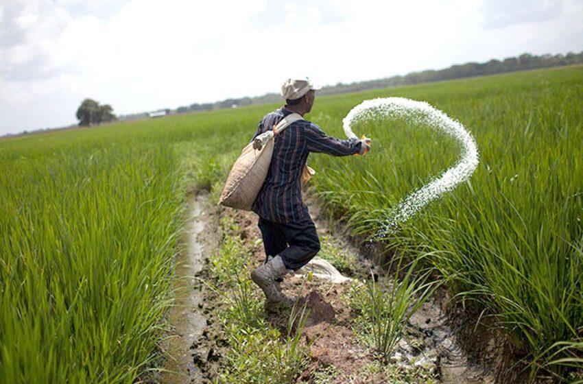 Venezuela aumenta produção de arroz, mas segue deficitária