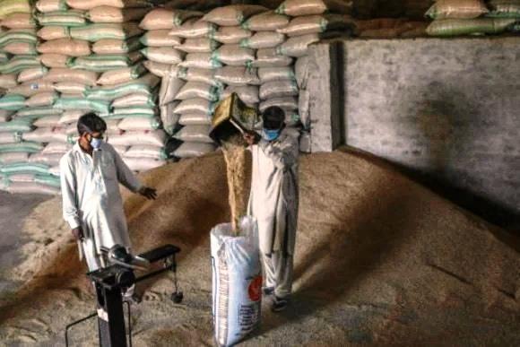 Índia e Paquistão se enfrentam na União Europeia por arroz basmati