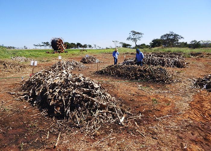 Pesquisa aponta grande contribuição de bioinsumos e silício no arroz de terras altas