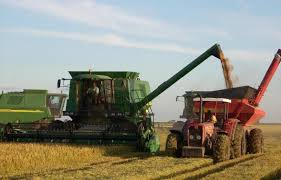 Valores de la exportación de arroz subieron un 28% en el mes de abril en Uruguay
