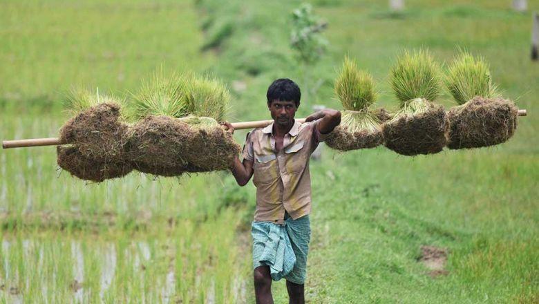 Índia se transforma em hub global de exportação de arroz graças à Covid