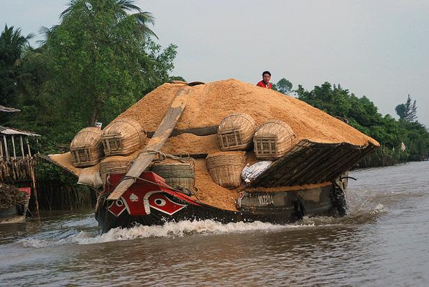 Vietnã: Exportações de arroz caíram para quase 4 milhões de t